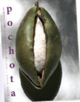 POCHOTA FANZINE 1